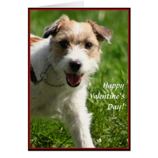 Happy Valentine's day Jack Russell Terrier card