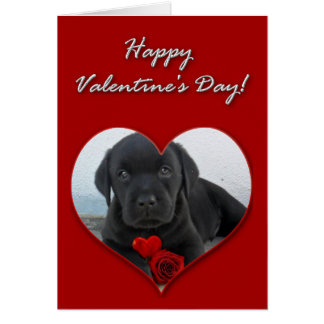 Happy Valentine's Day Labrador puppy card