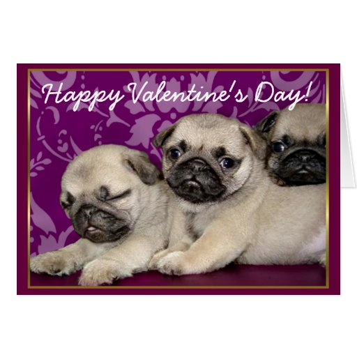 Happy Valentine's Day Pug puppies greeting card