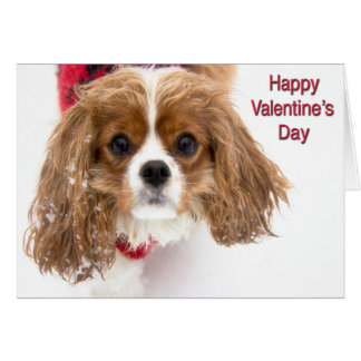 Happy Valentine's Day Sowny Cavalier King Charles Greeting Card