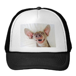 Happy Weimaraner Cap