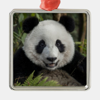 Happy young panda, China Silver-Colored Square Decoration