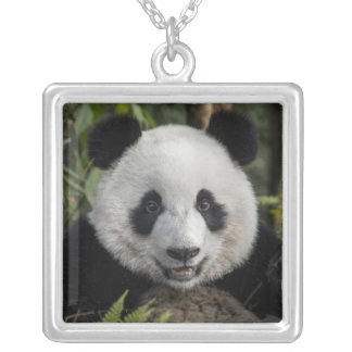 Happy young panda, China Silver Plated Necklace