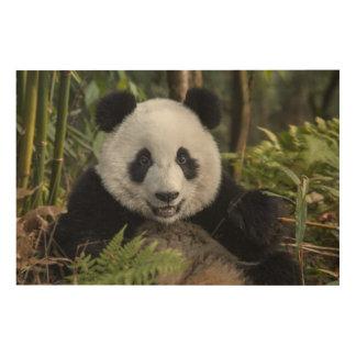 Happy young panda, China Wood Canvases