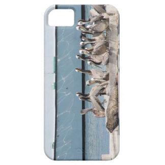 Harbor Friends iPhone 5 Cases