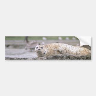 Harbor Seal Bumper Sticker