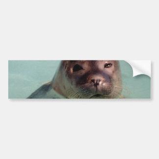 Harbor Seal Bumper Sticker Car Bumper Sticker