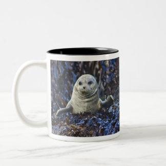 Harbor Seal (Phoca vitulina) Two-Tone Mug
