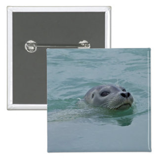 Harbor Seal swimming in Jokulsarlon glacial lake 15 Cm Square Badge