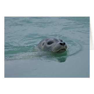 Harbor Seal swimming in Jokulsarlon glacial lake Greeting Card