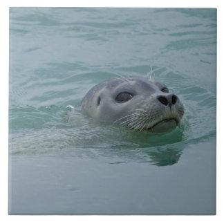 Harbor Seal swimming in Jokulsarlon glacial lake Large Square Tile