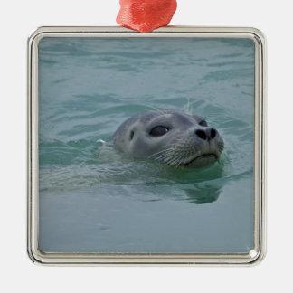 Harbor Seal swimming in Jokulsarlon glacial lake Silver-Colored Square Decoration