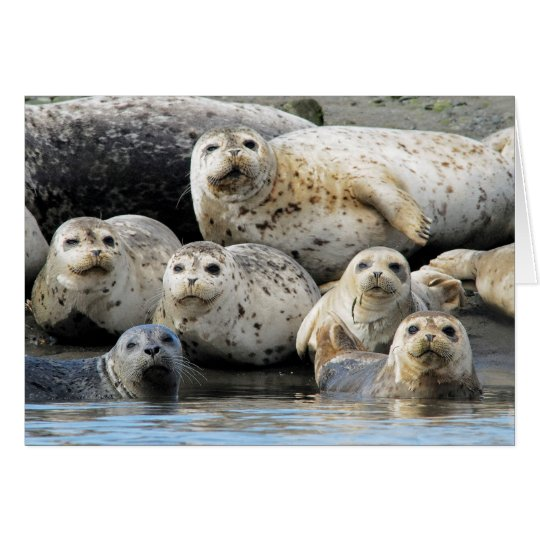 Harbour Seals Hauled Out on Sandy Beach Card