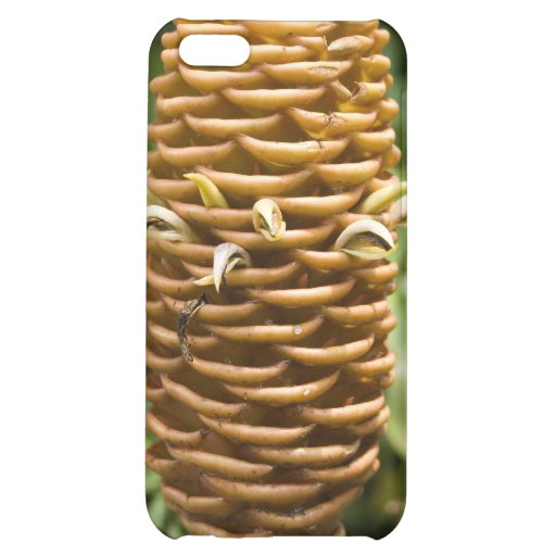 Hardy Cone Flower iPhone 4 Case