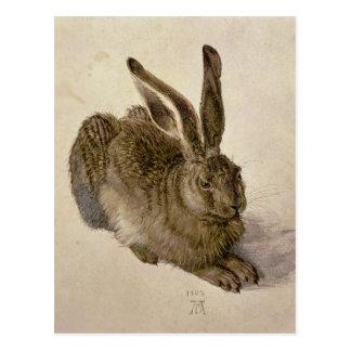 Hare, 1502 postcard