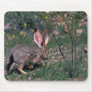 Hare Alone Mousepads
