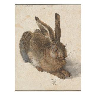 Hare by Albrecht Durer Postcard