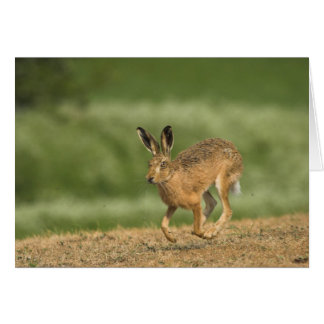 Hare Card Greeting Cards