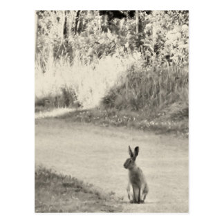 Hare today postcard