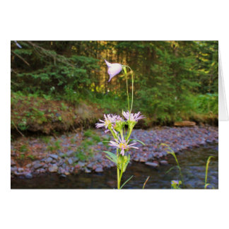 Harebell & Meadow Aster Greeting Card