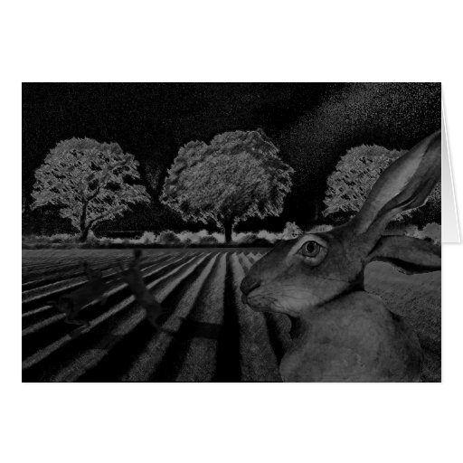 Hares at Night Greeting Cards