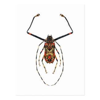 Harlequin Beetle Postcard