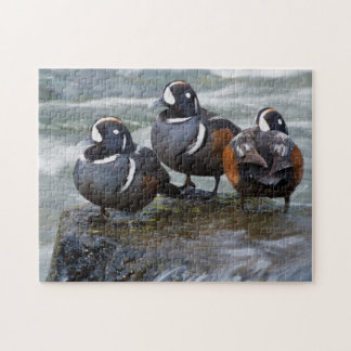 Harlequin Drakes Resting in fresh water rapids Jigsaw Puzzle