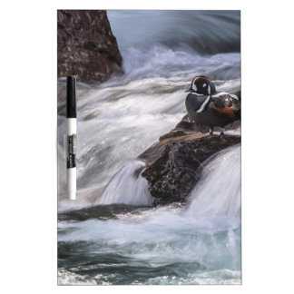 Harlequin duck and waterfall Dry-Erase whiteboard