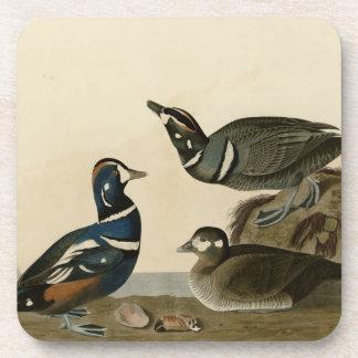 Harlequin Duck Beverage Coaster