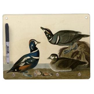 Harlequin Duck Dry-Erase Boards
