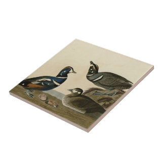 Harlequin Duck Small Square Tile
