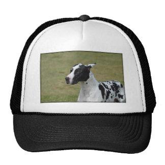 Harlequin Great Dane Cap
