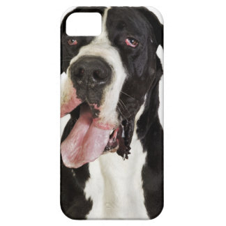 Harlequin Great Dane, close-up on white Case For The iPhone 5