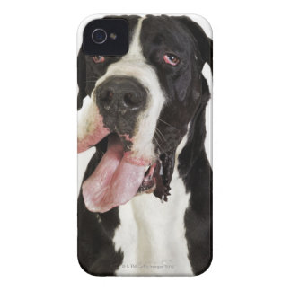 Harlequin Great Dane, close-up on white iPhone 4 Case