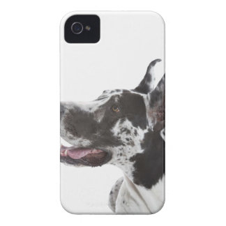 Harlequin Great Dane iPhone 4 Cover