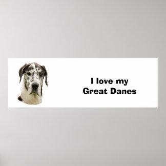 Harlequin Great Dane photo Poster
