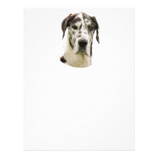Harlequin Great Dane Portrait Photo 21.5 Cm X 28 Cm Flyer