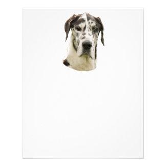 Harlequin Great Dane Portrait Photo 11.5 Cm X 14 Cm Flyer