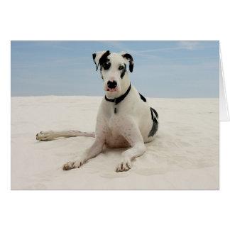 Harlequin Great Dane Puppy Dog Card - Verse