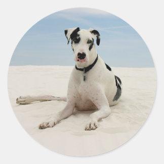 Harlequin Great Dane Puppy Dog Sticker / Seal
