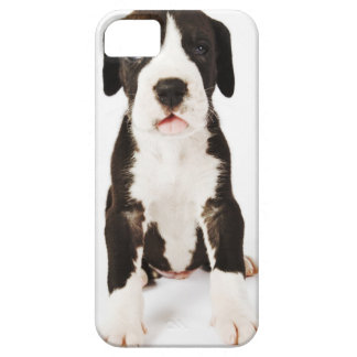 Harlequin Great Dane puppy on white background Case For The iPhone 5