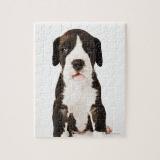 Harlequin Great Dane puppy on white background Jigsaw Puzzle