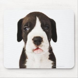 Harlequin Great Dane puppy on white background Mouse Mat