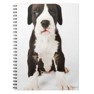 Harlequin Great Dane puppy on white background Notebook
