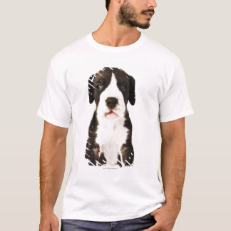 Harlequin Great Dane puppy on white background T-Shirt