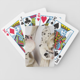 Harlequin Great Dane puppy sleeping on mother Bicycle Playing Cards