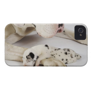 Harlequin Great Dane puppy sleeping on mother iPhone 4 Case-Mate Case