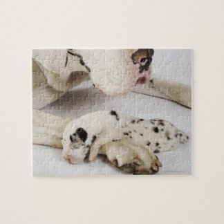 Harlequin Great Dane puppy sleeping on mother Jigsaw Puzzle