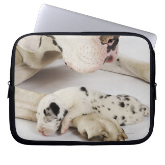 Harlequin Great Dane puppy sleeping on mother Laptop Sleeve
