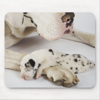Harlequin Great Dane puppy sleeping on mother Mouse Pad